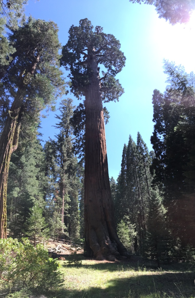 giant-tree-sequoia-forest-park-usa