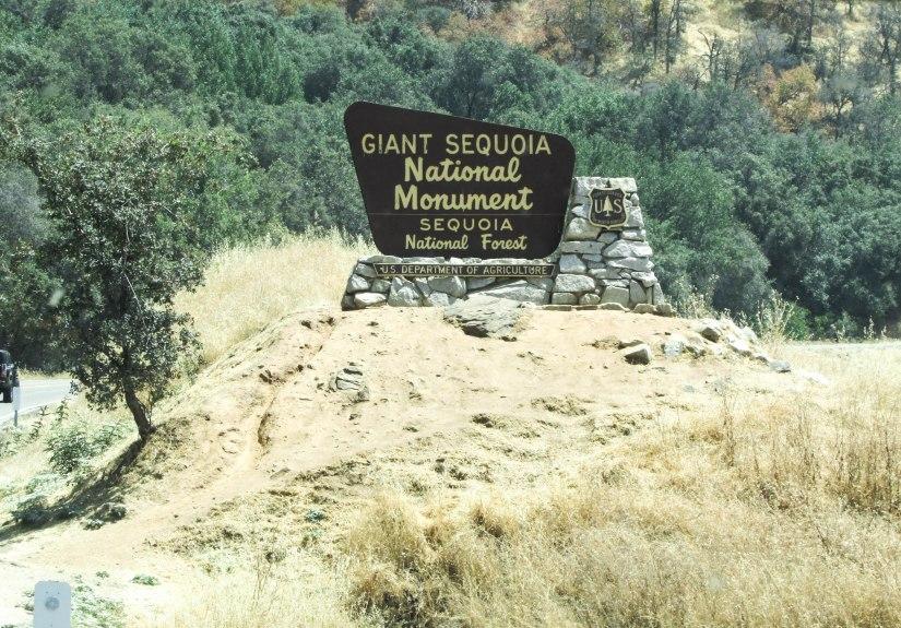 sequoia-park-usa-forest-californie-tree-giant