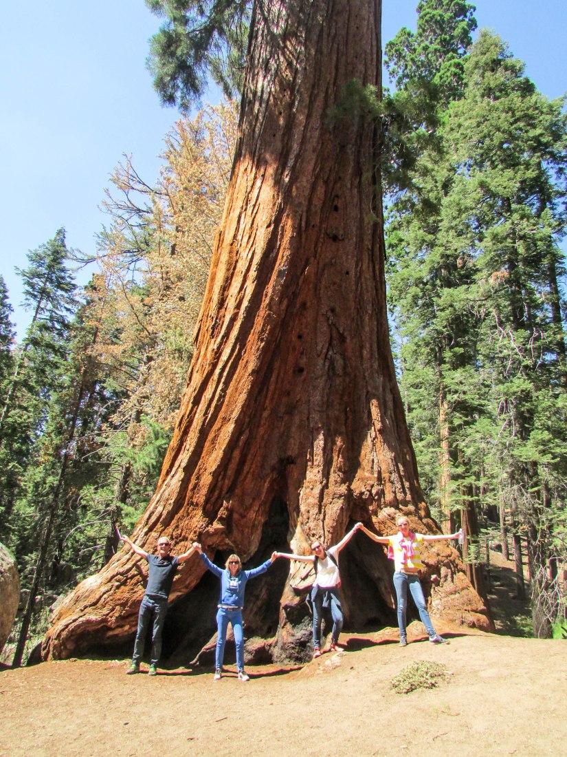sequoia-park-usa-californie-tree-forest-family-tronc