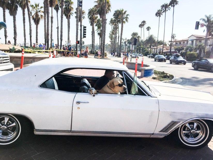 dogs-santabarbara-palmtrees-usa-beach-cars-america